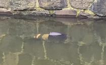 Mężczyzna wyłowiony z kanału Raduni w...