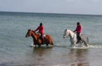 Konie na plaży w Sopocie cz. 3