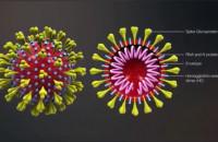 Czy będzie lekarstwo na koronawirusa? Ekspert wyjaśnia