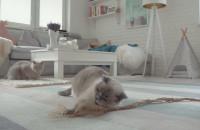 Kocie zabawy podczas kwarantanny #zostanwdomu
