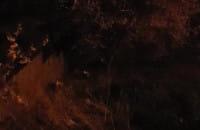 Dwa małe borsuki na Chełmie