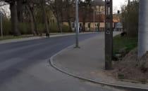 Dziki na Czyżewskiego w Oliwie