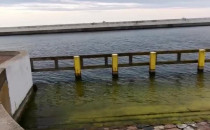 Foka przy końcu Skweru Kościuszki w Gdyni