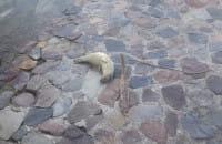 Foki odpoczywają w centrum Gdyni