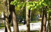 Dziki w sopockim parku