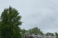 Trzy śmigłowce wojskowe nad Gdynią