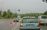 Kaczki na drodze. Pomógł kierowca
