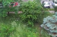Krótki deszcz w Gdańsku