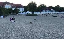 Dziki biegają przy molo w Sopocie