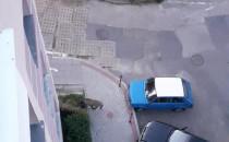 Dzik między blokami na Karpackiej w Oliwie