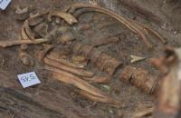 14 szkieletów odnaleziono w Nowym Porcie