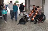 Muzycy pod Zieloną Bramą