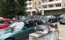 Ale gołębie obsiadły auto ;)