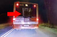 Zaczęli w autobusie, wysiedli i bili się dalej