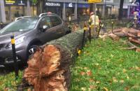 Drzewo spadło na samochód we Wrzeszczu