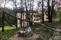 Powalone drzewo. Zablokowany wyjazd z osiedla