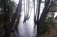 Cofka na potoku Jelitkowskim