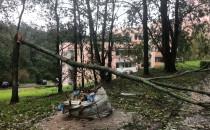 Powalone drzewo blokuje wyjazd z osiedla w...