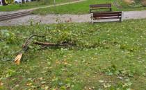 Połamane gałęzie na skwerze Plymouth w Gdyni