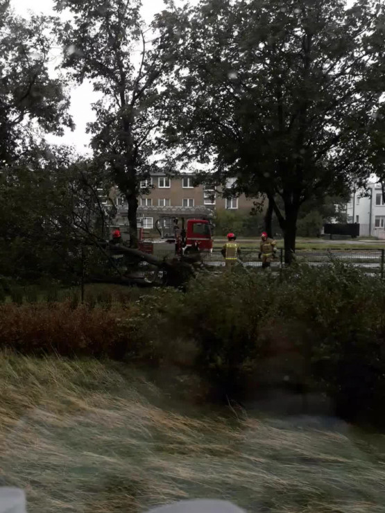 Usuwanie powalonego drzewa przy Hallera (obok Biedronki)
