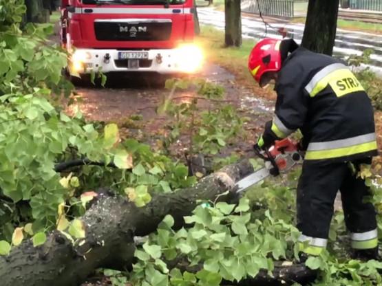 Usuwanie drzewa na al. Hallera