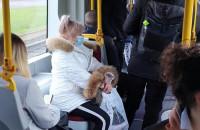 Sporo osób w tramwaju linii 6