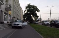 Królowa szos, chodników i dróg rowerowych