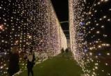 Iluminacje świąteczne rozbłysły w Parku Reagana