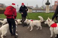 Świątecznie ubrane owczarki trenują na Długim Pobrzeżu