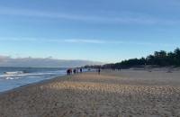 Dużo ludzi i psów na plaży w Gdańsku