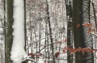Dużo dzików w Trojmiejskim Parku Krajobrazowym