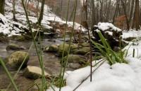 Zimowy spacer po Trójmiejskim Parku Krajobrazowym