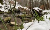 Zimowy spacer po Trojmiejskim Parku...