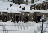Zimowy raj pingwinów w zoo