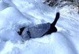Psie szaleństwa w śniegu