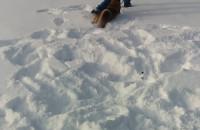Psie szaleństwo na śniegu