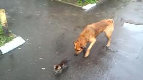 Koci stróż na Przeróbce