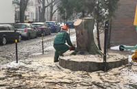 Wycinają drzewo przy Rossmanie w centrum Gdańska