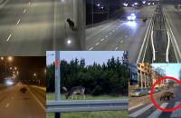 Zwierzęta w mieście - filmy czytelników