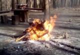 Ognisko w lasku na Ujeścisku