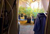 Plantacja marihuany w piwnicy we Wrzeszczu