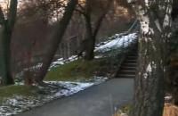 Dzik spaceruje na skrzyżowaniu alei Zwycięstwa i Redłowskiej