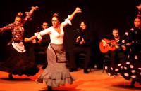 Najlepsze Flamenco na świecie