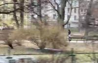 Na czymś takim można jeździć po parku?