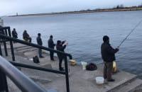Ławice śledzi wpływają do portu. Wędkarze łowią je z nabrzeża