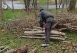 Wycinka drzew w Parku Przymorze
