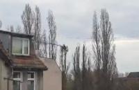 Cięcie drzew na Dolnym Mieście