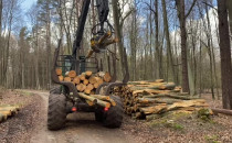 Trwa wycinka drzew w sopockich lasach