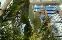 Pawilon z tropikalną roślinnością w Oliwie otwiera się dla gości