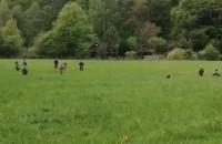 Żołnierze WOT ćwiczą na polanie